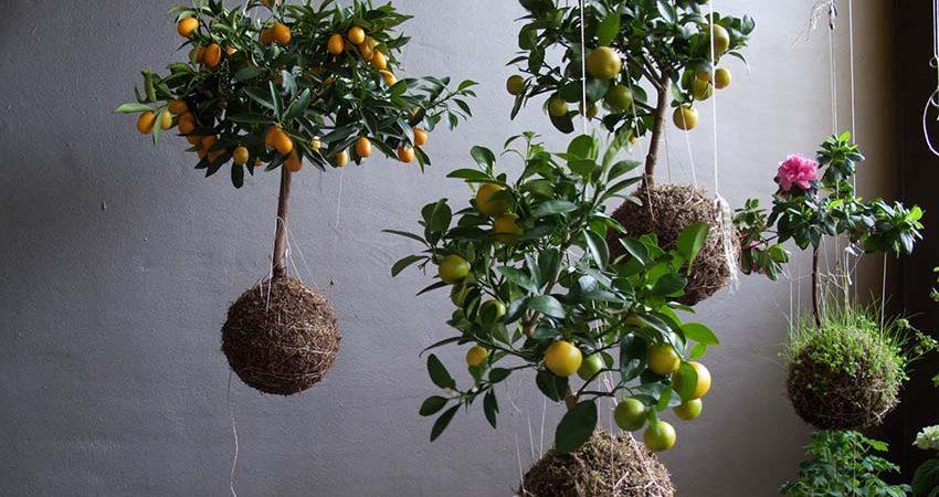 7 ý tưởng trồng hoa và cây cảnh từ vật liệu giá rẻ