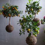 tự trồng cây cảnh trong nhà